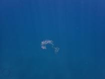 Microplástico mar
