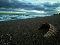 Desgaste de una concha día a día, ola tras ola en el mar de Alborán
