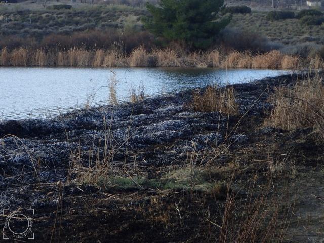 Zona de la presa quemada