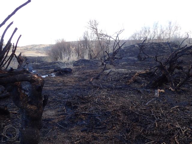 Zona quemada