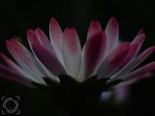 Primavera de jardín