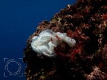 Toallita roca, Basuras marinas