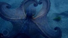 Octopus, secuencia mecanismo evasión y defensa