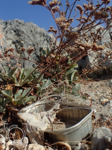 Limonium malacitanum en peligro de extinción