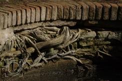 Agua, raíces, ladrillos